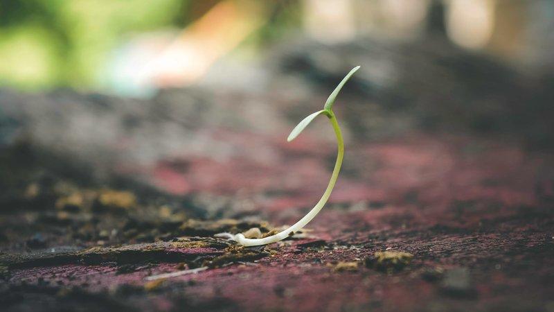 Leadership Resiliency